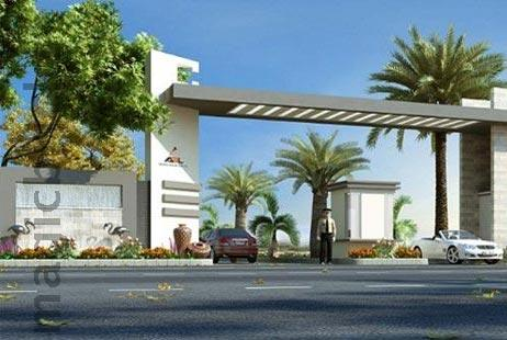 Palm Exotica - New Project
